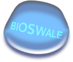bioswale