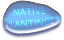 native-plantings
